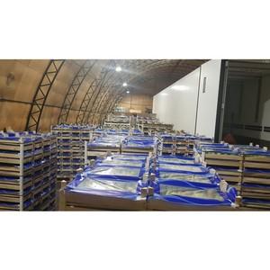 Смоленские таможенники задержали 20 тонн польских груш, ввозимых с сокрытием