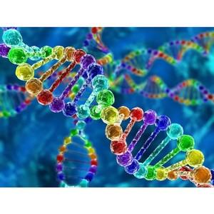 Ваши гены - ваш лучший диетолог в новом году
