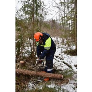 Бригады Владимирэнерго расчистили более 350 гектаров просек на учениях в Тверской области