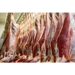 Шесть оленеводческих хозяйств НАО уже завершили заготовку мяса
