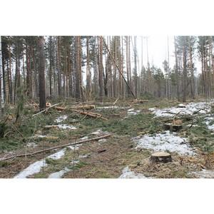 В Вожегодском районе подтвердились выявленные активистами ОНФ нарушения лесного законодательства