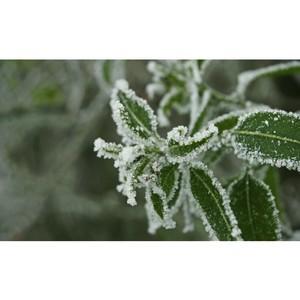 Результат исследования: коллаген повышает морозоустойчивость организма