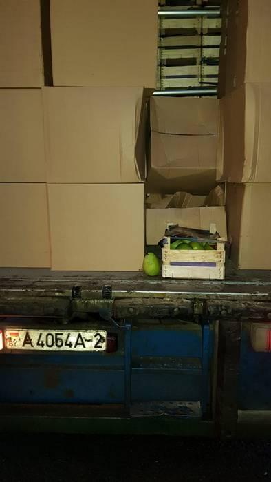 Смоленские таможенники выявили 80 тонн фруктов неизвестного происхождения, ввозимых из Белоруссии