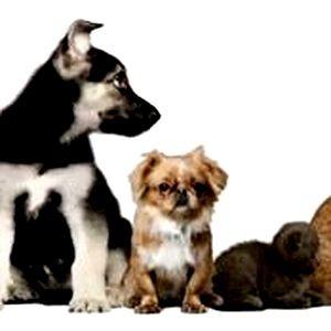 Создана первая международная социальная сеть для владельцев животных