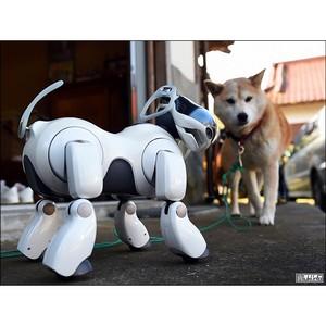 Более 500 участников собрал в Самаре робототехнический фестиваль «РобоФест-Приволжье»