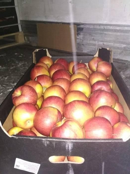 Смоленские таможенники  задержали  40 тонн яблок, ввозимых под видом овсянки