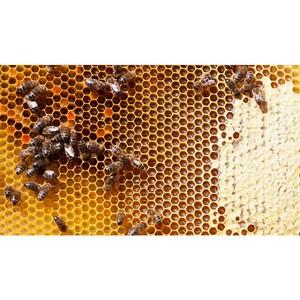 Приглашаем пчеловодов к участию в салоне «Жизнь фермера 2019»