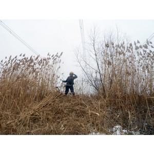 ФСК ЕЭС расчистит от сухого камыша свыше 56 га трасс ЛЭП в Курской и Белгородской областях