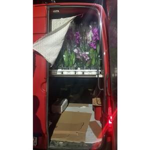 Смоленские таможенники  задержали орхидеи и белковый продукт, ввозимые без необходимых документов