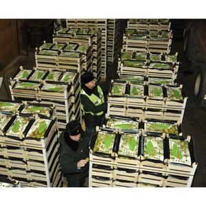 Под видом  подгузников и пиломатериалов в Россию пытались ввезти 80 тонн яблок и груш