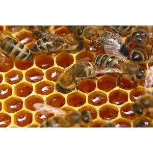 Республика Алтай: закрепление права на региональный бренд — импульс для развития пчеловодства