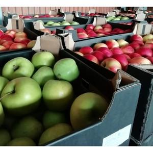 Казахстанские яблоки оказались польскими