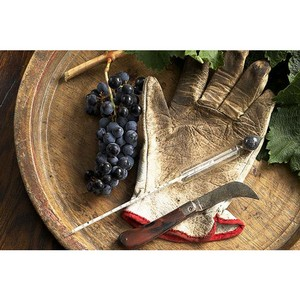 Закон о развитии виноградарства и виноделия поддержит кубанских производителей