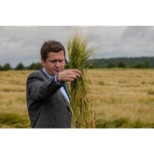 Новый сорт ячменя поможет «Балтике» поддерживать высокое качество пива
