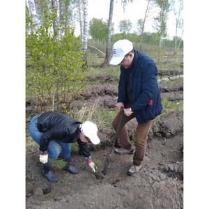 Сотрудники новосибирской пивоварни «Балтика» помогли высадить несколько тысяч сосен