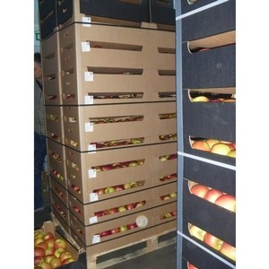 В Омской области уничтожено 40 тонн польских яблок