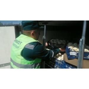 Смоленские таможенники  задержали 20 тонн шампиньонов «родом» из Польши