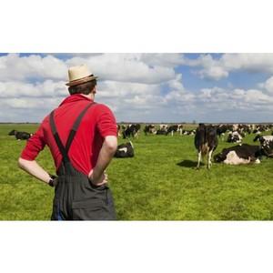 Мониторинг ОНФ: Необходимо усилить работу по сопровождению заявок и проектов начинающих фермеров