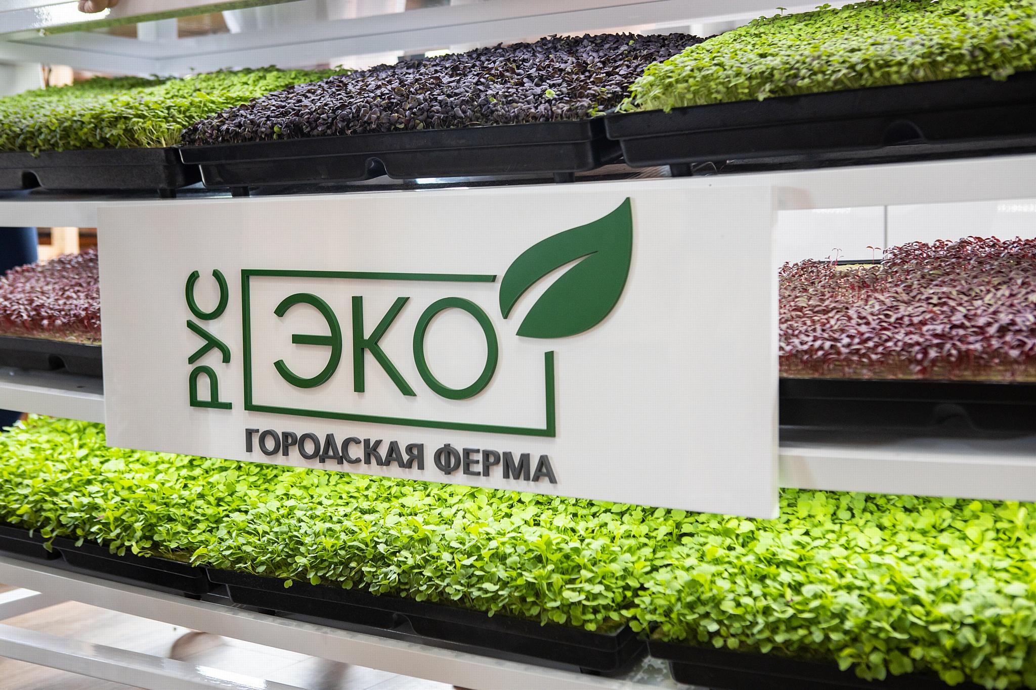 Сити-ферма «РусЭко» представила первый урожай микрозелени на международном форуме «Завтрак шефа»