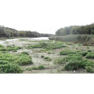 ОНФ призвал власти найти причину гибели рыбы и образования заторов на реке Тихая Сосна