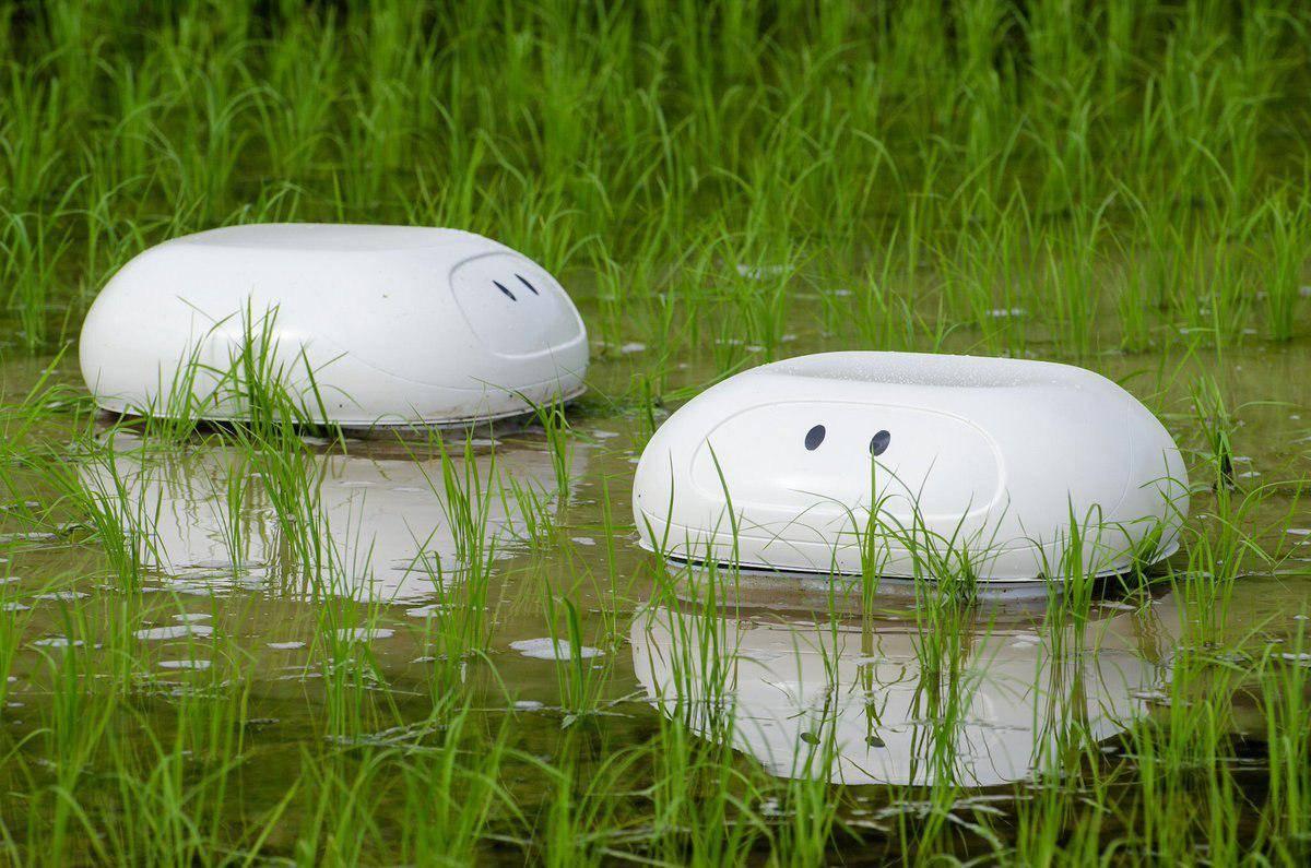 Робот-баламут защитит рисовые террасы от сорняков