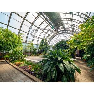 Аукционисты спасают оранжерею Таврического сада