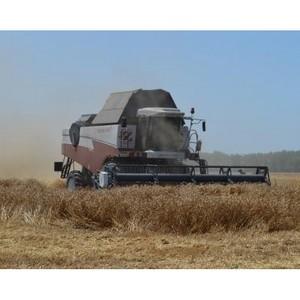 В Целинском районе идет обмолот ранних зерновых культур