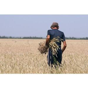 Башмачникова: Типовые фермерские проекты помогут развитию малого бизнеса в сфере сельского хозяйства