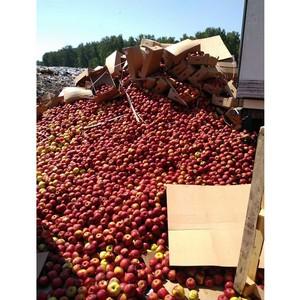 В Омской области уничтожено 20 тонн яблок