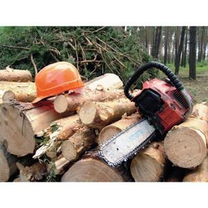 Эксперты ОНФ: Конфискация техники при незаконных рубках леса должна распространяться и на его перевозку