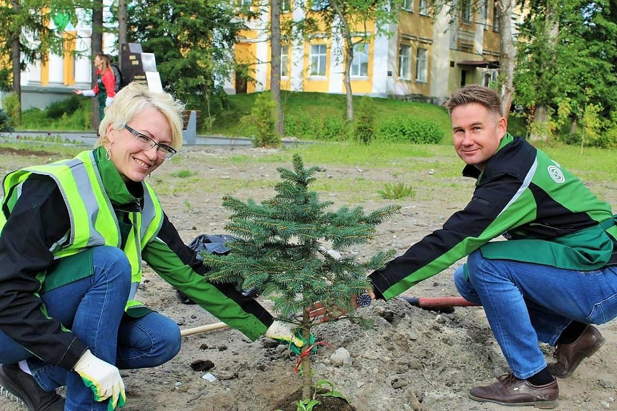 Волонтеры Segezha Group высадили 700 деревьев в 6 регионах России
