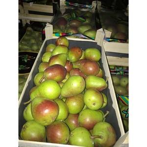 В Смоленской области задержали 20 тонн польских груш