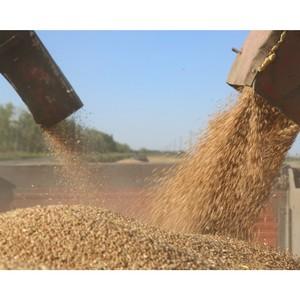 Темпы уборки зерна в Ульяновской области выше, чем в среднем по России и округу