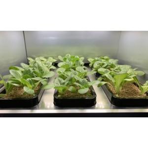 В январе будет представлена первая система домашнего садоводства от LG