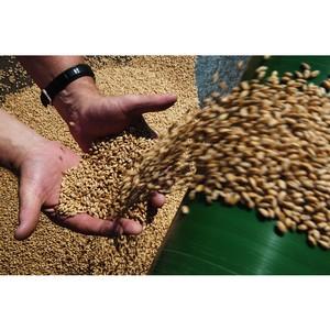 Учёные СФУ предложили щадящий способ гербицидной обработки зерновых