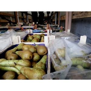 Смоленские таможенники изъяли около 40 тонн фруктов и овощей