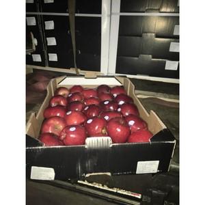 В Смоленскую область пытались незаконно ввезти 20 тонн польских яблок