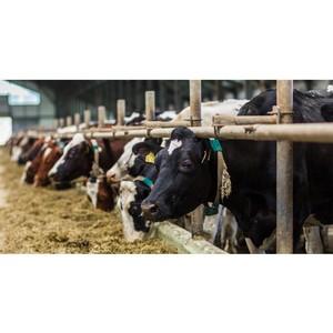 Как работает фермерский бизнес в условиях пандемии