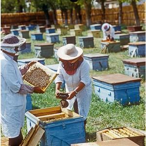 Необходимость создания пчеловодческих кооперативов во всех регионах РФ