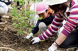 Panasonic объявляет конкурс детских экологических проектов