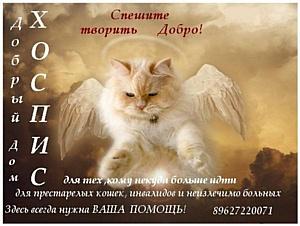 Хоспис для кошек получит информационную поддержку от юристов.