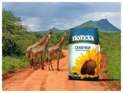 Одержи победу – Африка твоя