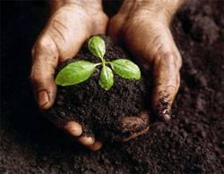 Комплекс по производству органических удобрений в Египте стоимостью в 2 млрд долларов начнет работу в 2011