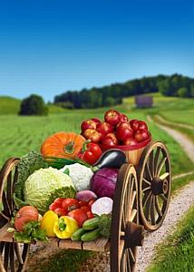 Праздник нового урожая в сети супермаркетов «Азбука Вкуса»