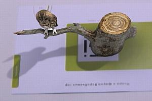 ������ �������� ������ �������: 3D ����������� �� ������ 3D ������� �� �������� EligoVision