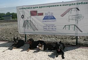 «Пумори-спорт» представляет инновационную площадку для выгула собак