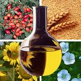 Мексика развивает производство биотоплива на основе растительного масла