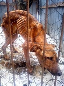 Milagres.ru в помощь приюту бездомных собак в Лобне