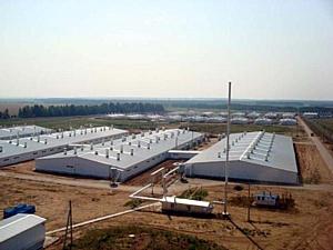 Крупнейший российский свинокомплекс увеличит объемы производства в два раза