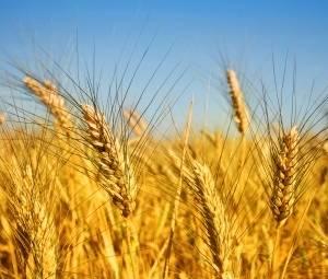 «Волски Биохим» раскрывает секреты высоких урожаев
